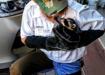 Darryl Forrest holds a baby racoon in his arms that was rescued during a wildlife removal call